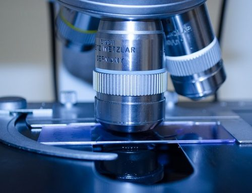 Researchers Look to Fucoidan in the Fight Against Cancer